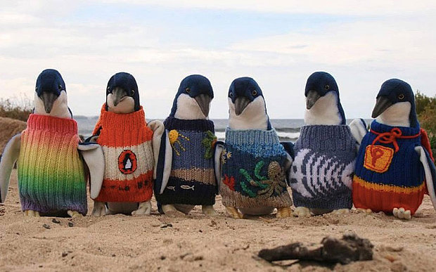 Penguin-Jumpers