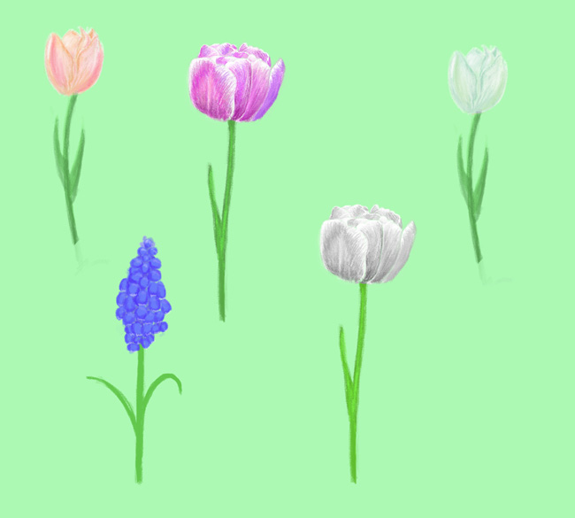 Flower-Samples-Digital-Painting
