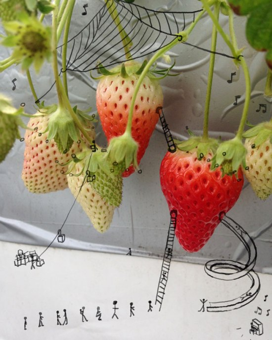 Day-11:28-Strawberries-pen-photo